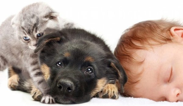 Bebé y mascotas