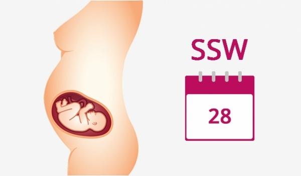 28. Schwangerschaftswoche (SSW) - jetzt informieren!